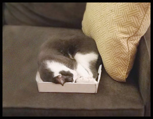 Pippin in box