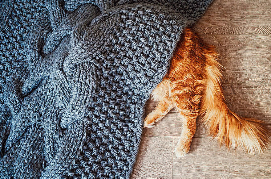 ginger cat under rug