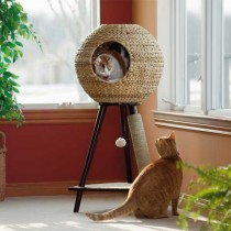 MVPs: My Top 10 Must-Have Cat Things