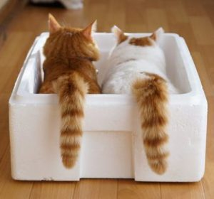 two cats in a box