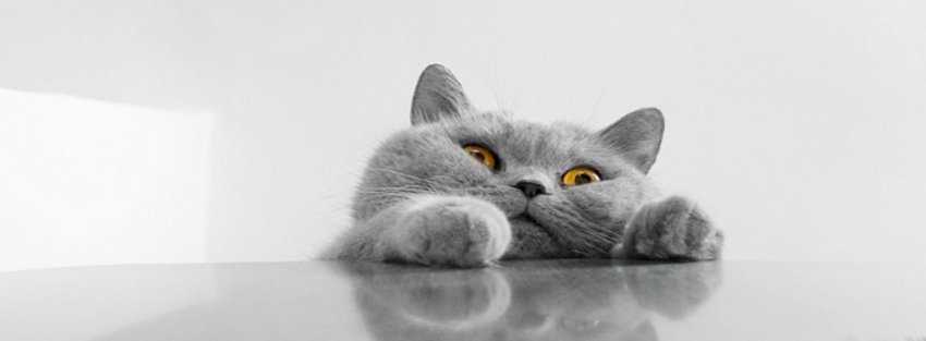 cat peering over table