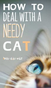 how-to-deal-with-a-needy-cat