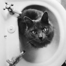 Why are cats so obsessed with bathrooms?