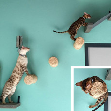 Cat Vertical Space 101: The Ultimate Guide