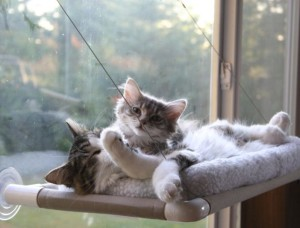 cats in a perch