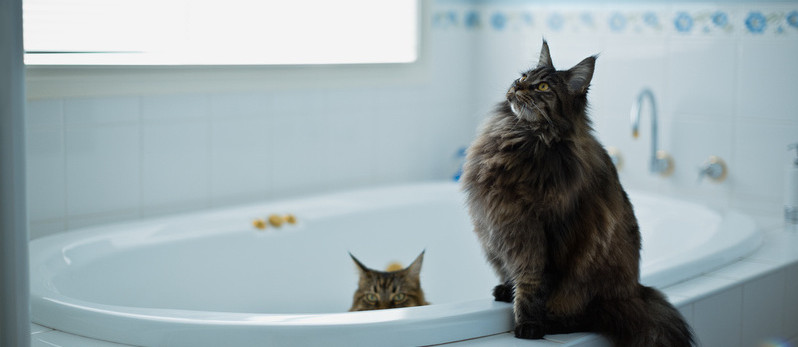 cats in the tub
