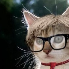 """Debunking the Cat Stigma / Why Cats Aren't """"Cool"""""""