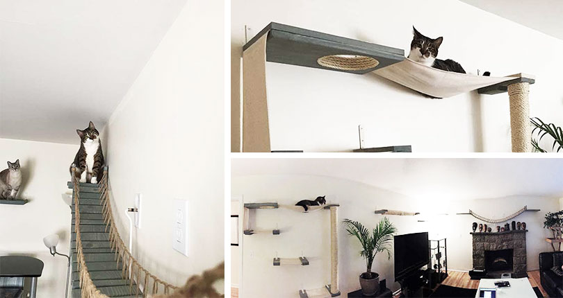 cat vertical space 101 the ultimate guide rh whycatwhy com how to make homemade cat shelves Real Wood Cat Trees