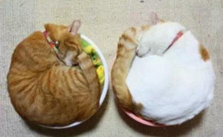 two round cats