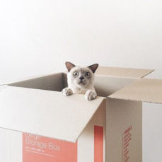 Why are cats so fascinated with boxes?
