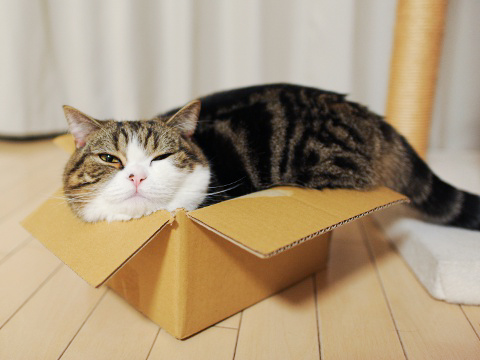 """Ah yiss,"" says Maru. ""Who needs a heated cat bed when you can have the box it came in?"""