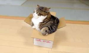 maru in a too small box