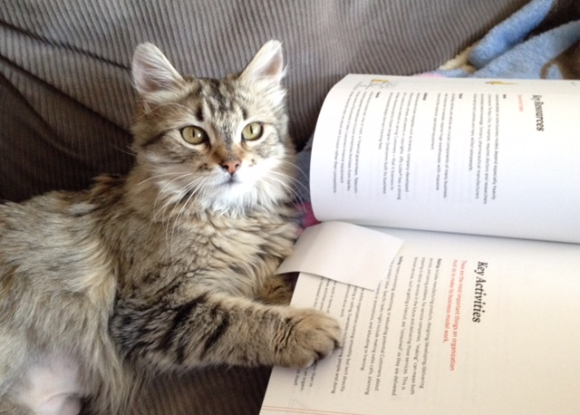 Zooey the cat reading a good book