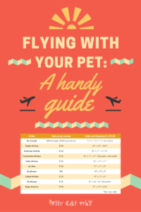 Traveling with a furry companion isn't the easiest thing in the world. But it also doesn't have to be the end of the world. All the logistics of pet-friendly air travel in one easy read. #cats #pets #whycatwhy #travel