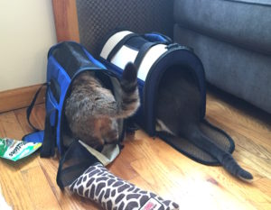 Sita and Pippin in their carriers