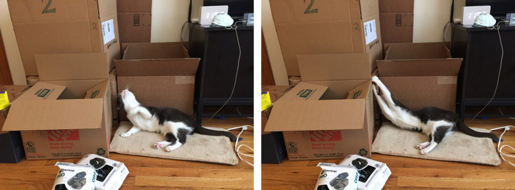 Pippin cat with boxes