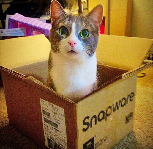 Toulouse the cat in a box