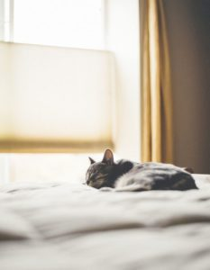 cat napping on bed