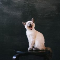 7 things your cat is trying to tell you: How to decode cat sounds