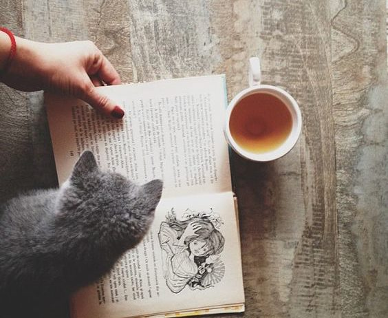 cat with book and tea