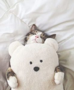 cozy cat with stuffed bear