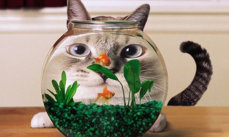cat fishbowl face