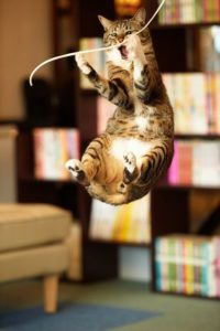 cat jumping for string