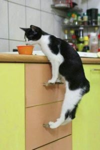 cat on a countertop