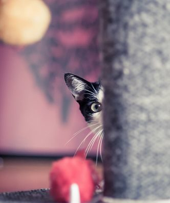 cat peeking around corner