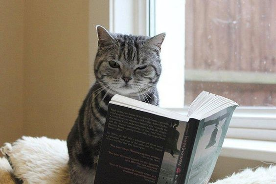 cat reading a boook