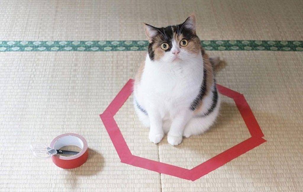 cat sitting in a tape circle trap