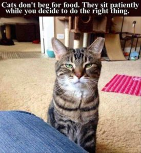 cats don't beg