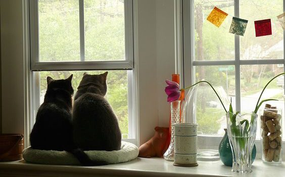 cats looking out the window