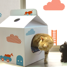 7 Things You Can Make With a Box (That Your Cat Will Go Bonkers For)