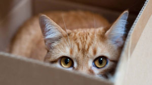 cat eyes in a box