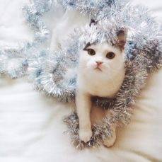 Your Kitties & The Holidays: Some Considerations