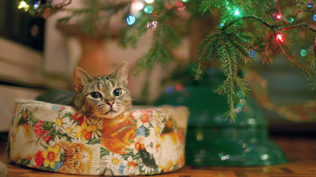 Your Kitties & The Holidays: Some Considerations |
