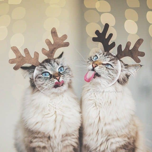 pitterpatterfurryfeet-cats-with-antlers