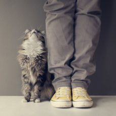 How To Get Your Cat To Like You More