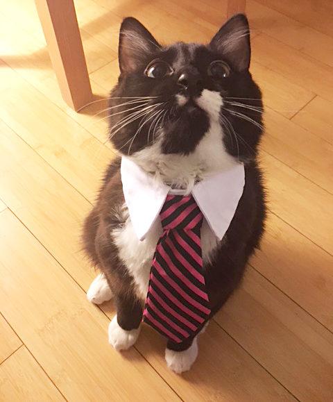 Favorite Cat Litter