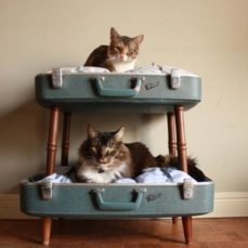 How To Travel (Or Move!) With Your Cats